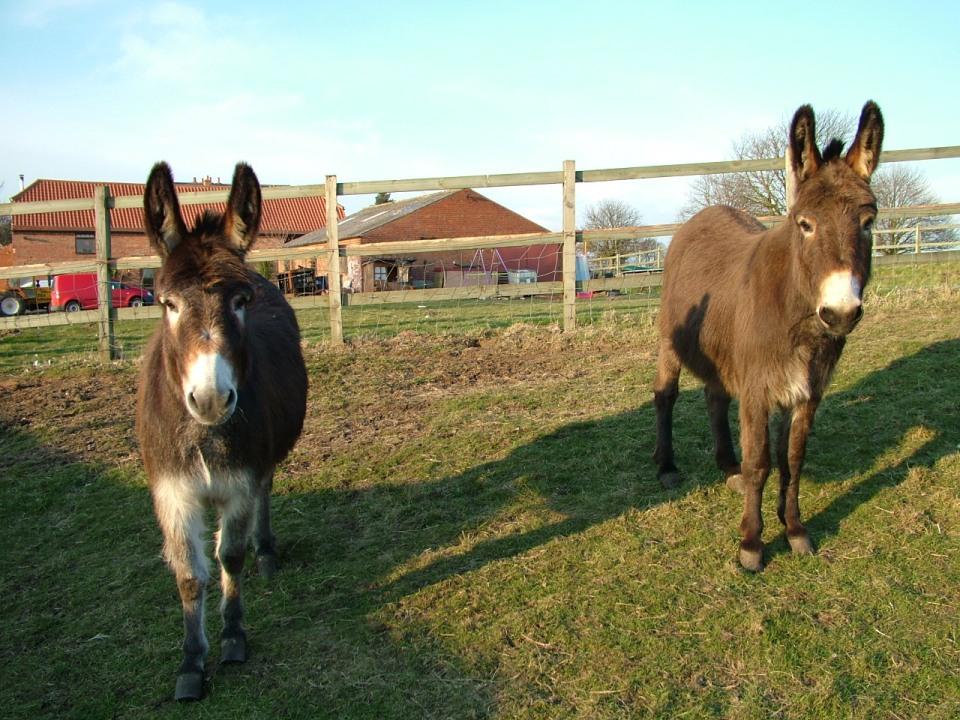 Sophie & James, The Donkeys