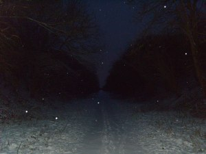 Snowfall In The Dark