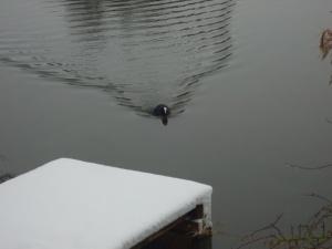 A Loan Bird On The Lake