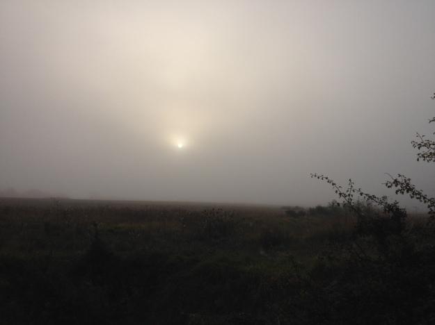 7.48am - Hidden Again