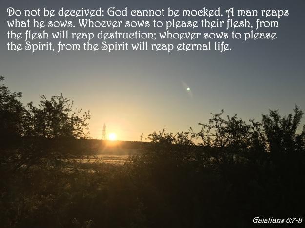 Galatians 6:7-8
